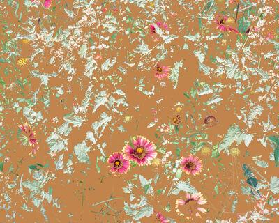 Aaron ROTHMAN, 'Wildflowers (PW1)', 2015
