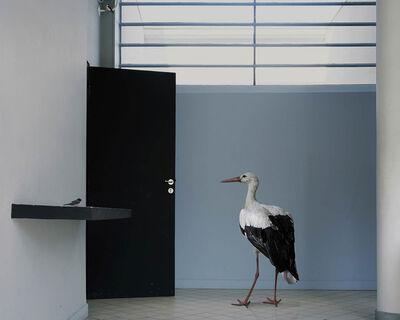 Karen Knorr, 'The Shelf, Série Fables'