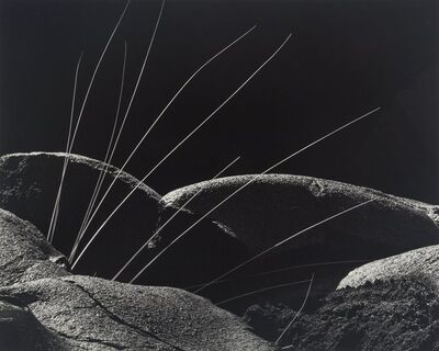 Brett Weston, 'Grass and Lava', 1982