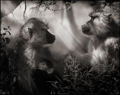 Nick Brandt, 'Baboons in Profile, Amboseli', 2007
