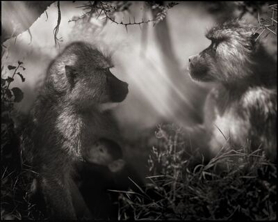 Nick Brandt, 'Baboons in Profile, Amboseli 2007', 2007