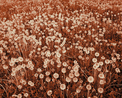 David Favrod, 'Son magnifique champ de fleurs (Her beautiful field of flowers) ', 2013