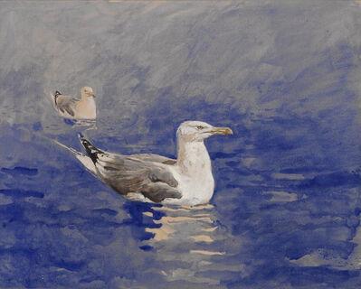 Jamie Wyeth, 'Gull Study #3', 1976