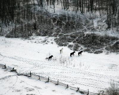 Eamon Mac Mahon, 'Horses, Northern BC', 2005