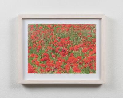 Eva Koch, 'Poppies #6', 2015