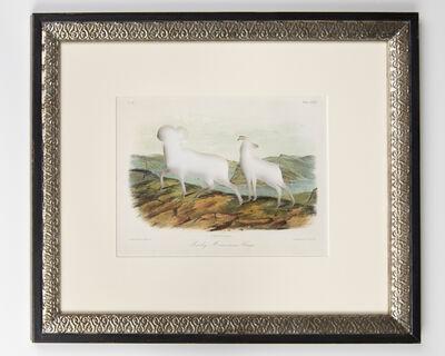 Brandon Ballengée, 'RIP Audubon's Bighorn Sheep: After John Woodhouse Audubon, 1849', 2014