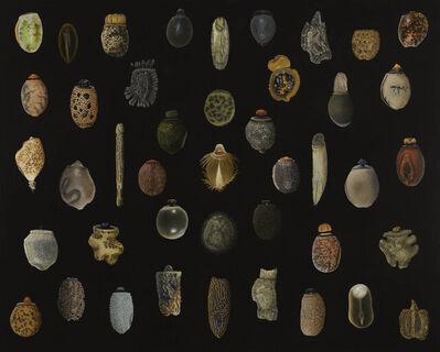 Isabella Kirkland, 'Phasmid Eggs', 2021