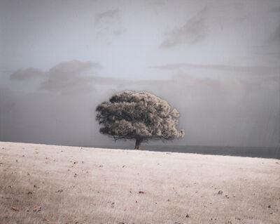 Kate Breakey, 'Sheoak by Ocean, Kangaroo Island, South Australia'