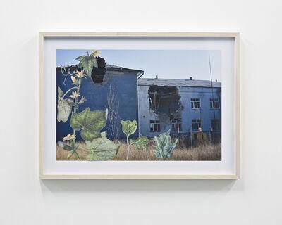 Nikita Kadan, 'Protection of Plants', 2015