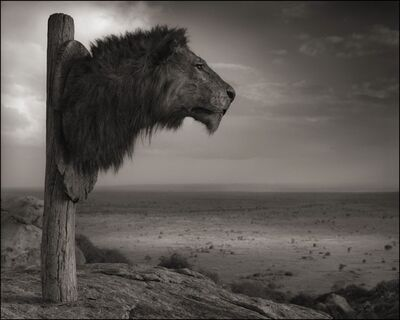 Nick Brandt, 'Trophy of Lion, Chyulu Hills, 2012', 2012