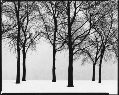 Harry Callahan, 'Chicago (trees)', 1950