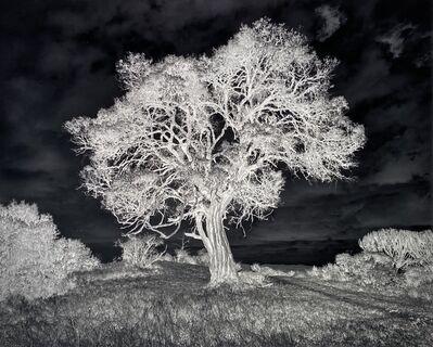 Nicolas Auvray, 'Tree of Light', 2016