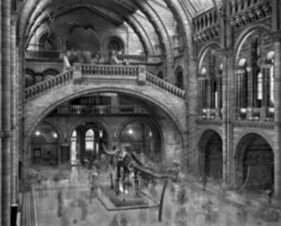 Matthew Pillsbury, 'Diplodocus, Natural History Museum, London', 2007