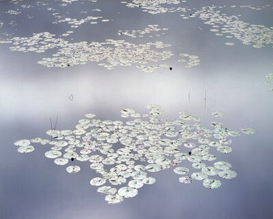 Christopher Burkett, 'Shining Waterlilies, Maine', 1989