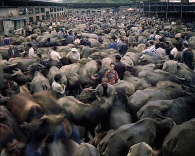 Qin Wen, 'Bull Market, Guizhou', 2012