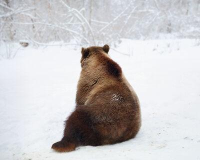 Tamas Dezso, 'Sitting Bear (near Zarnesti)', 2013