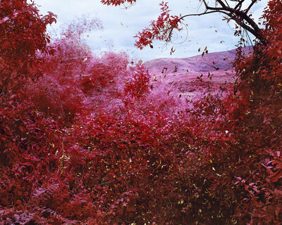 Richard Mosse, 'Spiders', 2015