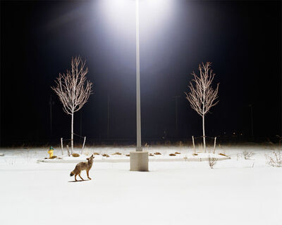 Amy Stein, 'Howl', 2007