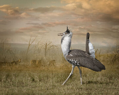 Cheryl Medow, 'Kori Bustard And Zebras', 2009