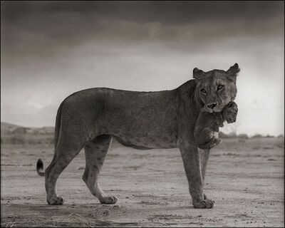 Nick Brandt, 'Lioness Holding Cub in Mouth, Maasai Mara', 2012