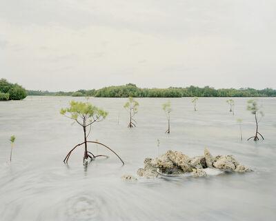 Kang Jeauk, 'Mangrove Forest, Olango Island, Philippines', 2012