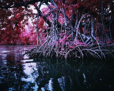 Richard Mosse, 'Mangrove I', 2014