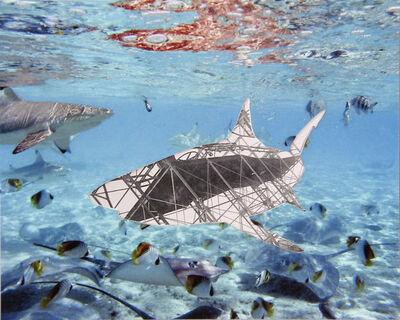 Carolina Caycedo, 'el tiburón', 2012