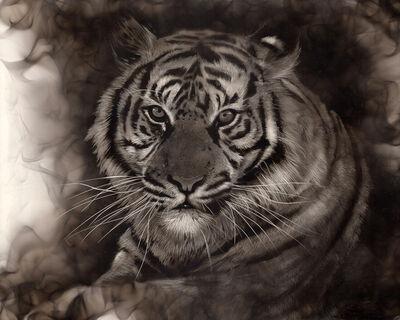 Steven Spazuk, 'Tiger', 2020