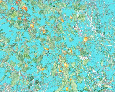 Aaron ROTHMAN, 'Wildflowers (PVGM1)', 2015