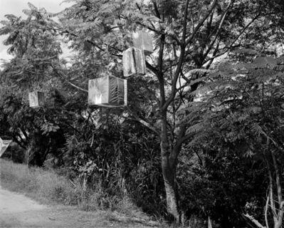 Jo Ractliffe, 'The gifts in the trees, Oaxaca', 2018