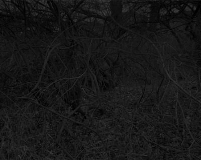 Dawoud Bey, 'Night Coming Tenderly, Black: Untitled #11 (Bent Branches)', 2017