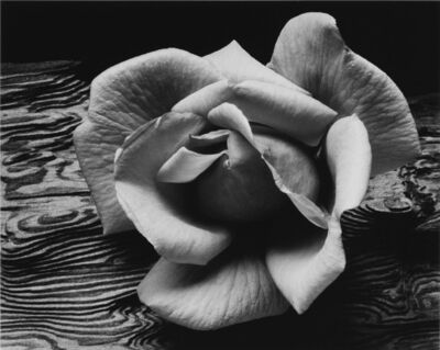 Ansel Adams, 'Rose and Driftwood', 1932