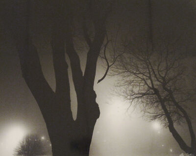 Alex Fradkin, 'Tree at Night'