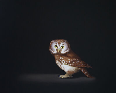 Isabelle du Toit, 'Boreal Owl', 2019