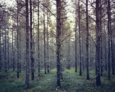 LM Chabot, 'Forêts 02', ca. 2010