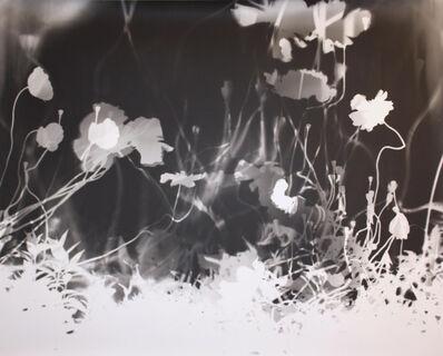 Jared Handelsman, 'Poppies', 2006
