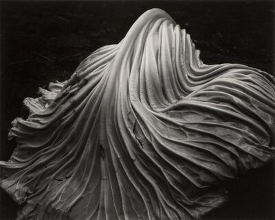 Edward Weston, 'Cabbage Leaf', 1931
