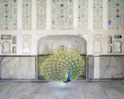 Karen Knorr, 'Master of Seduction, Amer Fort, Amer', 2017