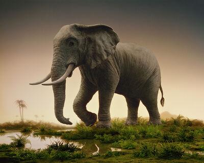 Didier Massard, 'Elephant', 2008