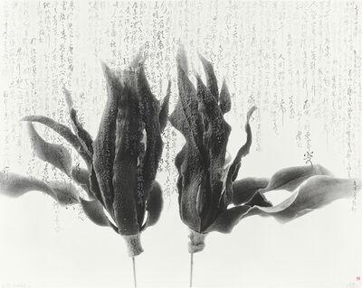 Chu Chu  儲楚, 'Magnolia-Shakespeare-Silver 白兰花-莎士比亚-银', 2010-2017