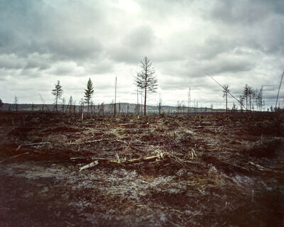 LM Chabot, 'Forêts 03', ca. 2010