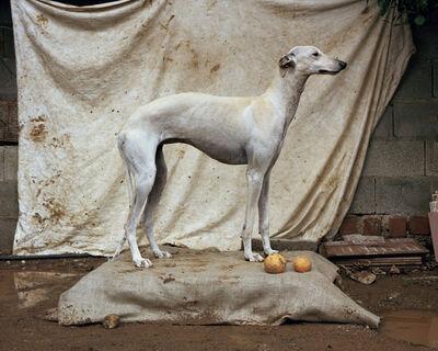 Martin Usborne, 'Galga #2', 2015