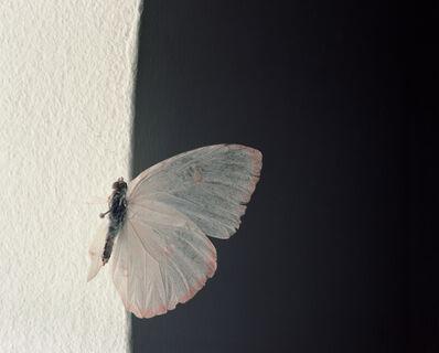Brigitte Lustenberger, 'Bugs Unknown III', 2014