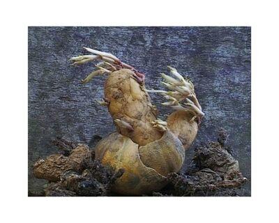 Agnès Varda, 'Patate Coeurs 1', 2002