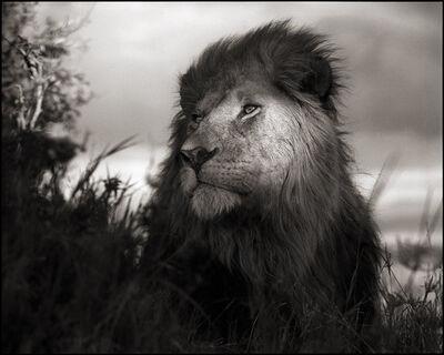 Nick Brandt, 'Lion in Shaft of Light, Maasai Mara', 2012