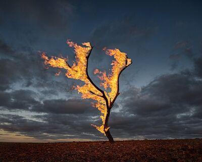 Murray Fredericks, 'Burning Tree Allandale Station', 2015