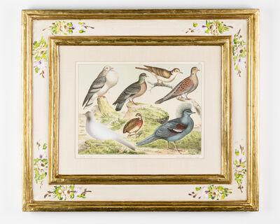Brandon Ballengée, 'RIP Passenger Pigeon: After Ferdinando Sordelli', 1887/2015