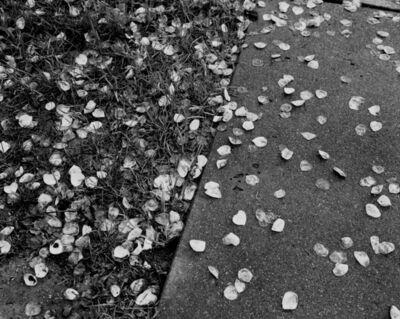 Matt Eich, 'Untitled (Petals), Charlottesville, Virginia', 2017
