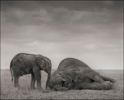Nick Brandt, 'Two Elephants, Amboseli', 2012