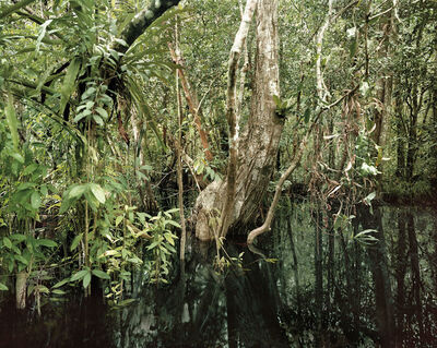 Olaf Otto Becker, 'Primary swamp forest 02, Black Water, South Kalimantan, Indonesia', 2012